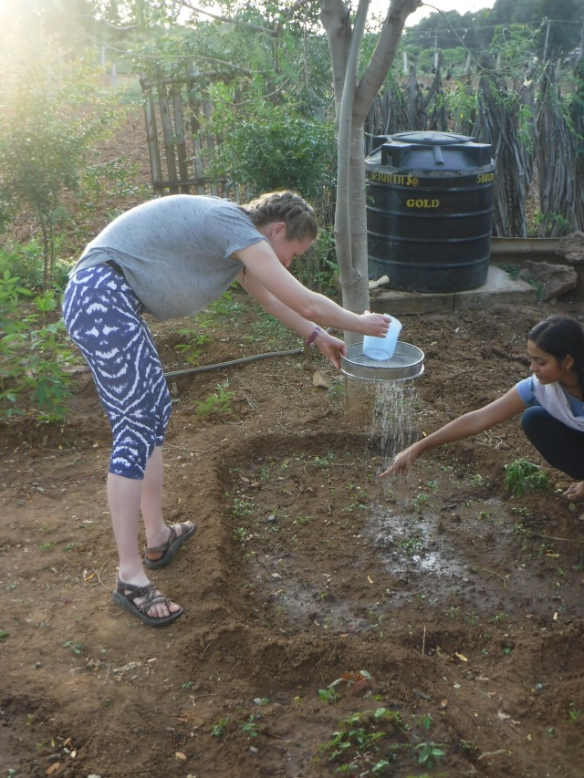 My yoga instructor taught me more than postures - gardening in India too!  The pictured method  simulates rainfall.