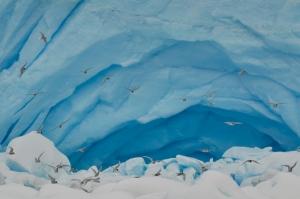peterman birds ice cave IAE 2016 257 (2)